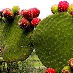 Plantas medicinales, aliadas para combatir la obesidad