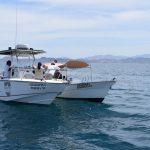 Detienen embarcaciones por actividades no autorizadas con tiburón ballena