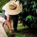 Nueva organización nace en busca de agricultura sostenible