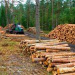Organizaciones ambientales rechazan Ley General de Biodiversidad