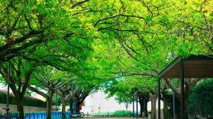 reforestacion-urbana01
