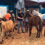 Veterinarios mexicanos rescatan animales en Haití tras paso de huracán