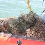 Retiran redes fantasma para proteger a vaquita marina