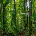 Salud de bosques tropicales está en riesgo