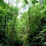 El Salvador y Taiwán firman acuerdo de vigilancia ambiental