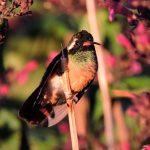 México tiene su propio santuario para el colibrí