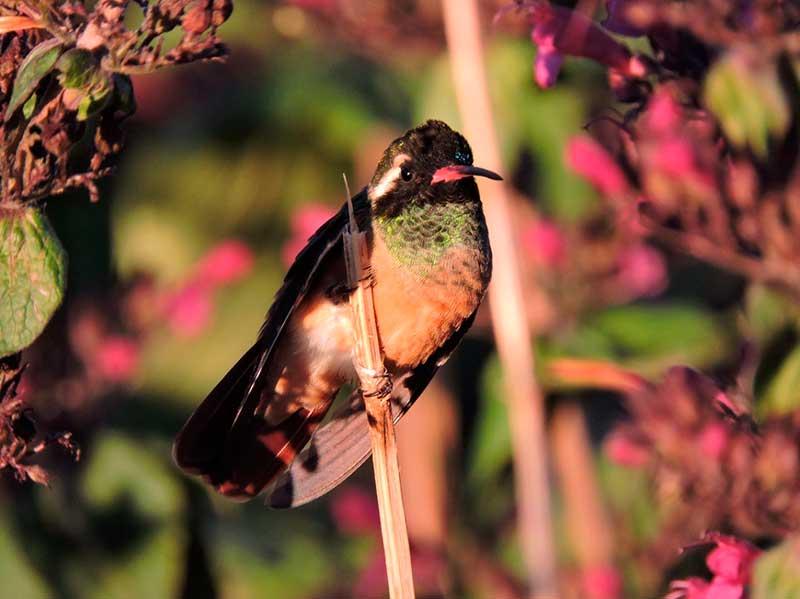 santuario-colibri