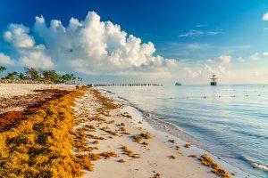COVID-19 impactó negativamente en acumulación de sargazo en el Caribe