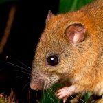 Se extingue mamífero por cambio climático