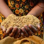 Se reúnen estados miembros del Fondo de Desarrollo Agrícola