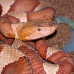 Serpientes en México viven en peligro por desinformación