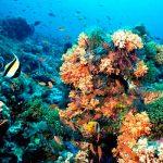 Falta identificar arrecifes en el Golfo de México