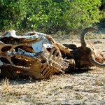 Sonora aprueba Ley de Cambio Climático