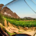 Aumenta consumo de vino en México