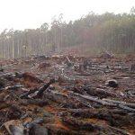 México pierde 91 mil 600 hectáreas de bosque al año por tala