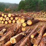 Crece tala ilegal junto con carteles