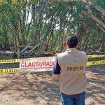 Profepa denuncia tala de casi mil árboles en Edomex