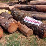 Detener tala ilegal, el gran reto en México