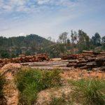 Piden detener tala en selva de Malasia