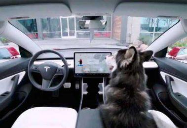 tesla-perros01