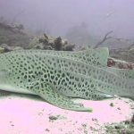 Tiburón hembra logra reproducirse asexualmente