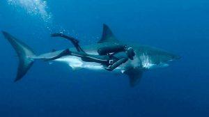 tiburonesa01