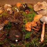 Michoacán cuenta con 690 especies de hongos