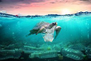 Tortugas en Bangladesh, atrapadas entre plástico al llegar a una playa