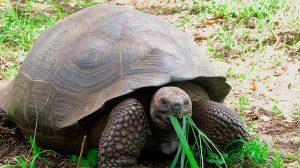 tortuga-extinta