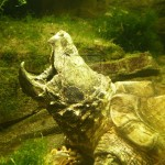 """En peligro de extinción """"dinosaurios del mundo de las tortugas"""""""