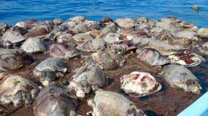 tortugas-muertas01