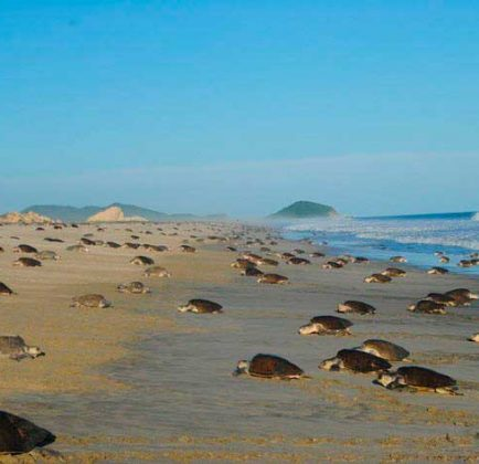 tortugas-tulum02