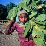 Reducen trabajo infantil agrícola en Nayarit