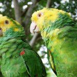 Tráfico ilegal pone en riesgo a 21 especies de aves mexicanas