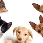 Ciudad de México reconoce trato digno a los animales