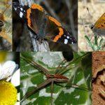 UNAM estudia pérdida de especies por cambio climático
