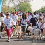 """UNAM te lleva a una """"Caminata con Mascotas"""""""
