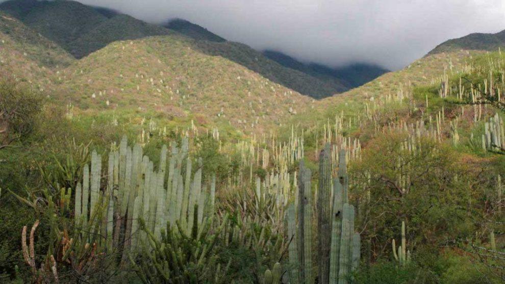 Valle de Tehuacán-Cuicatlán, México