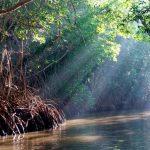 Universitarios mapean manglar en Yucatán con dron