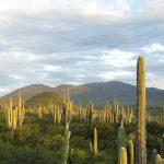 Valle de Tehuacán aún no es Patrimonio Mundial