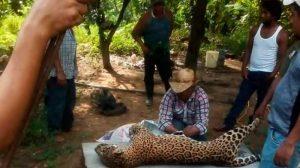 veracruz-jaguar