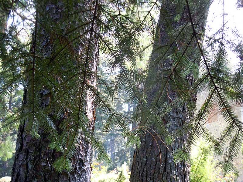 vocacion-forestal01