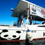 WWF presenta campaña para proteger fondos marinos