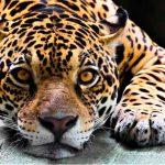 Zacango continúa labores de apoyo a la conservación de las especies
