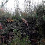 Encuentran zorra gris en Reserva Ecológica de la UNAM